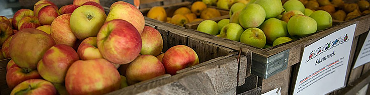 Apples at Cold Spring Orchard farmstand