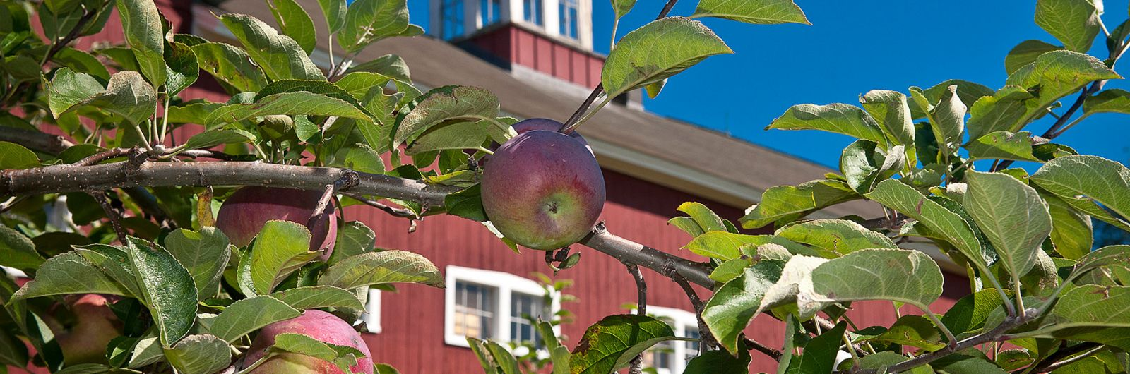 Cold Spring Orchard building and apple trees