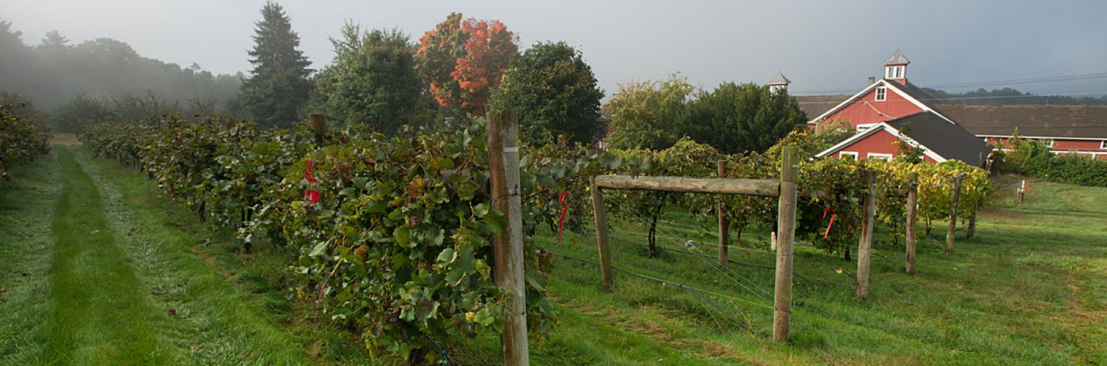 Cold Spring Orchard buildings and grape vines